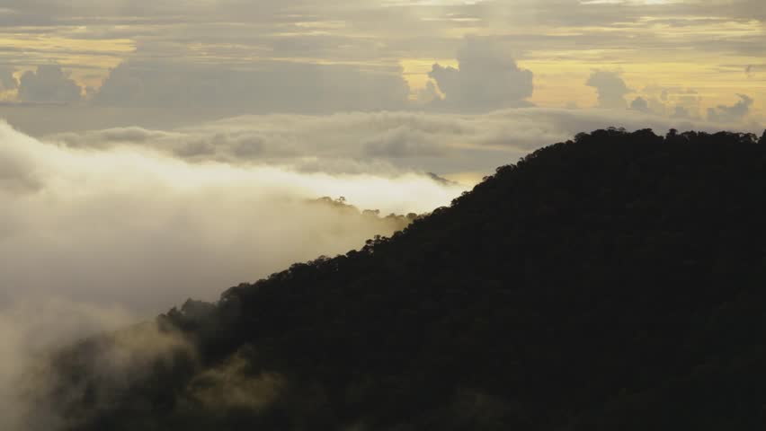 Rolling cloud over misty rainforest in jungle of Sabah Malaysian Borneo Island time lapse - during sunset