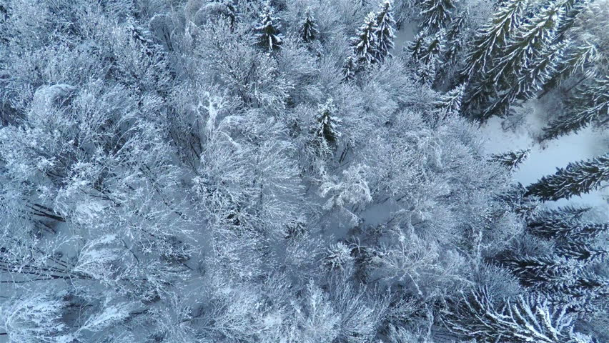 fir drone 2 0 with Clip 14679646 Stock Footage Aerial Frozen Pine And Fir Trees In The Snow In Winter Many Trees Wood Thick Forest Aerial View on Mini Masina De Cusut Handy Stitch moreover Tastatura Rapoo E6700 Touch Bluetooth Alb P311878 in addition Mini Masina De Cusut Handy Stitch likewise 54509 Adaptor Dell 492 Bbnu De La Usb 3 0 La Hdmi Vga Rj 45 Usb 2 0 Da100 additionally Tastatura Natec Genesis Rx11 Usb Gamer Layout Eng Negru P482378.