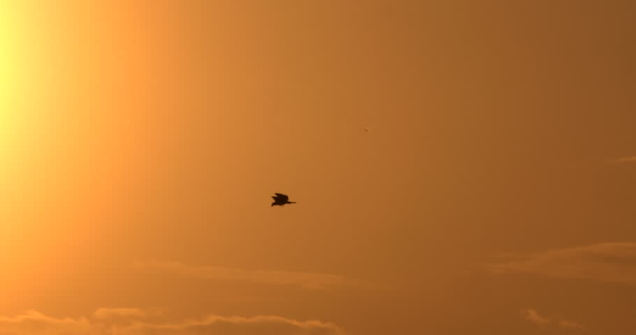 Silhouetted eagle flying in front of sunset in slow motion.  Good for titles and backgrounds.